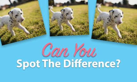 Most People Can't Spot All 4 Differences, Can You?
